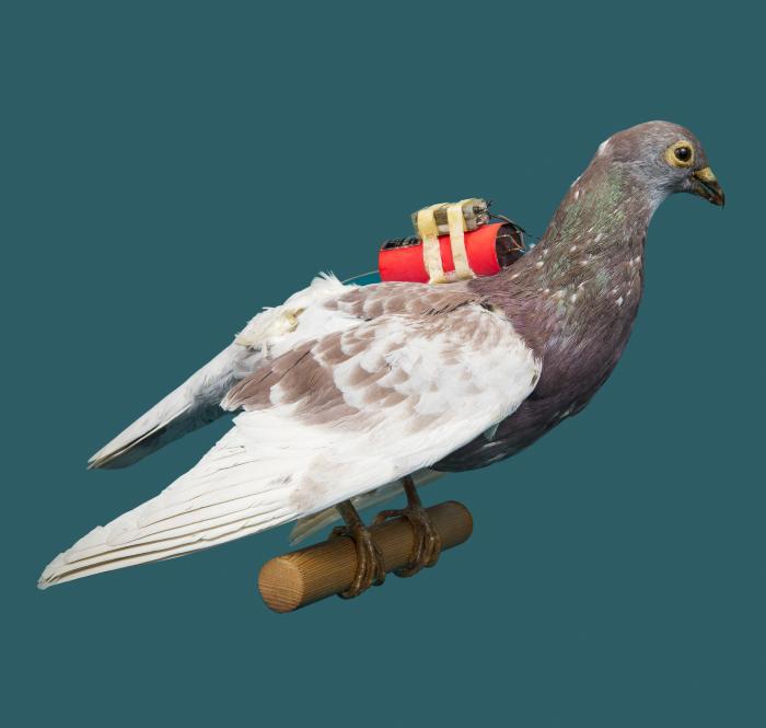 Pigeon Telemetric System, 1965-70