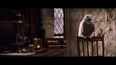 Invisibility Cloak - Harry Potter and the Philosopher's Stone