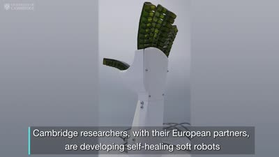 Self-healing robots that 'feel pain'